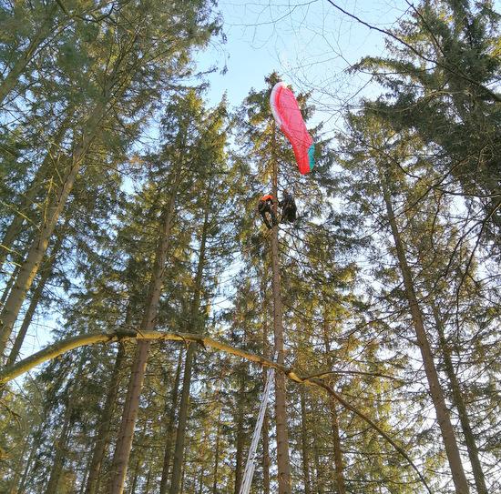 Gleitschirmflieger landete im Baumwipfel