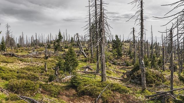 Zur Zukunft des Waldes: Experten diskutieren in Daaden