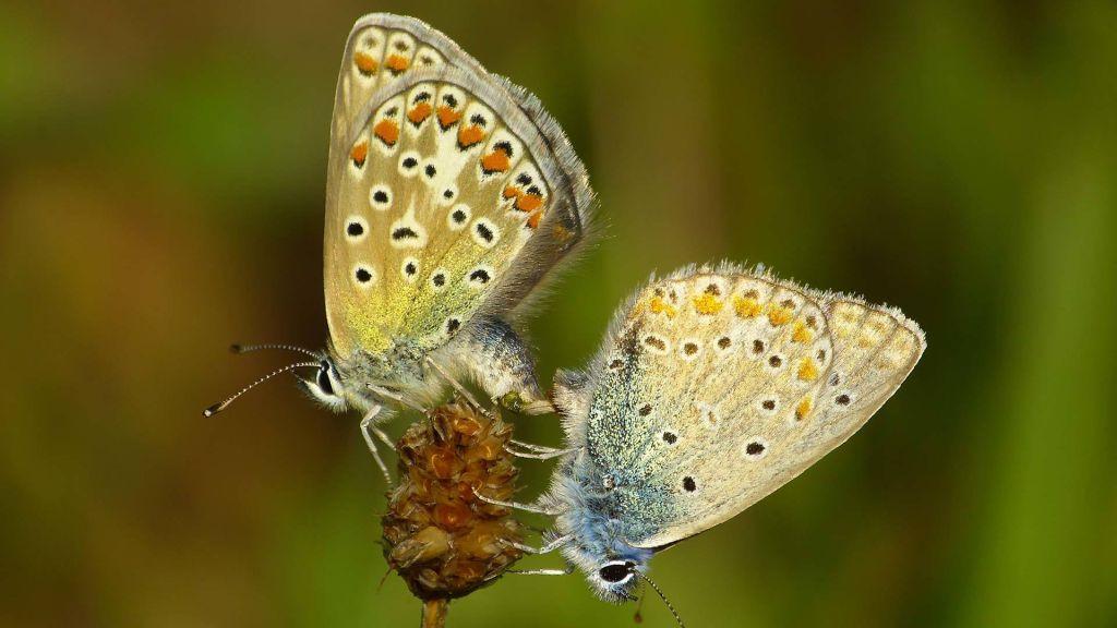 Zeit für Schmetterlinge: fördern und beobachten