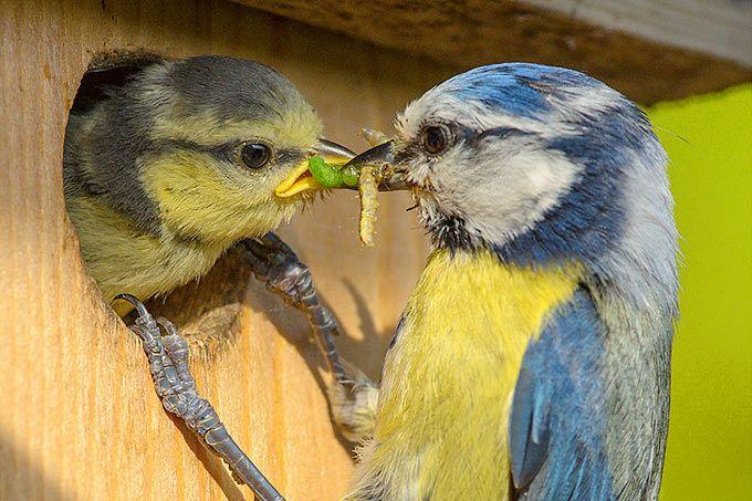 Vogelzählung knackt 100.000-Teilnehmer-Marke