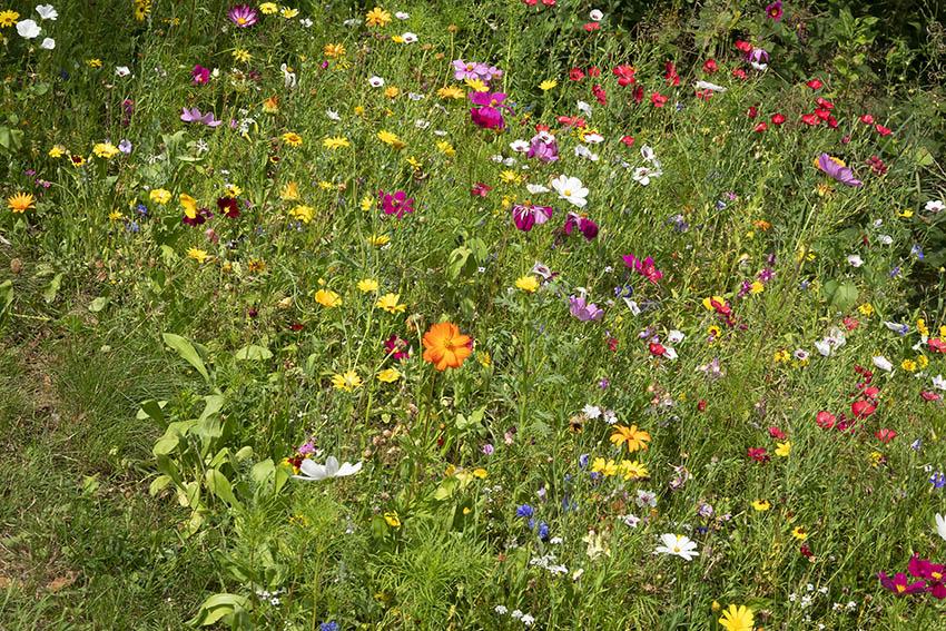 CDU und FDP setzen sich für ökologische Vielfalt ein