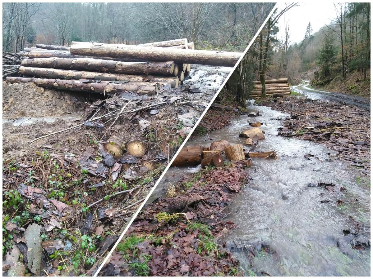 Wissen: Deshalb ist der Borkenkäfer auch an Überflutungen schuld