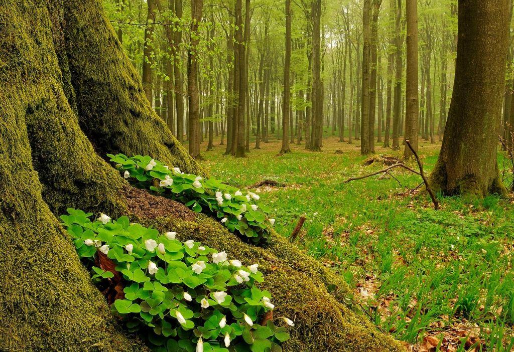 Am 21. März ist der internationale Tag der Wälder
