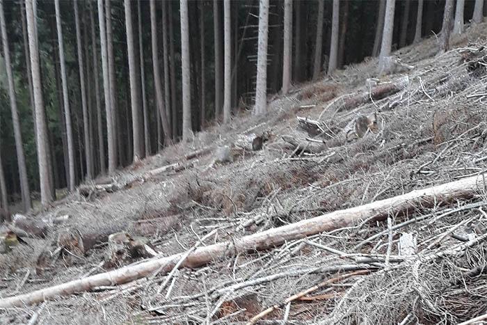 Waldbegehung im Gemeindewald Caan