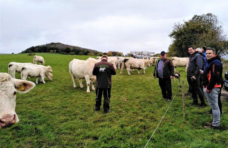 Kommunalpolitiker zu Besuch bei den Charolais-Rindern der Familie Becker. Fotos: privat