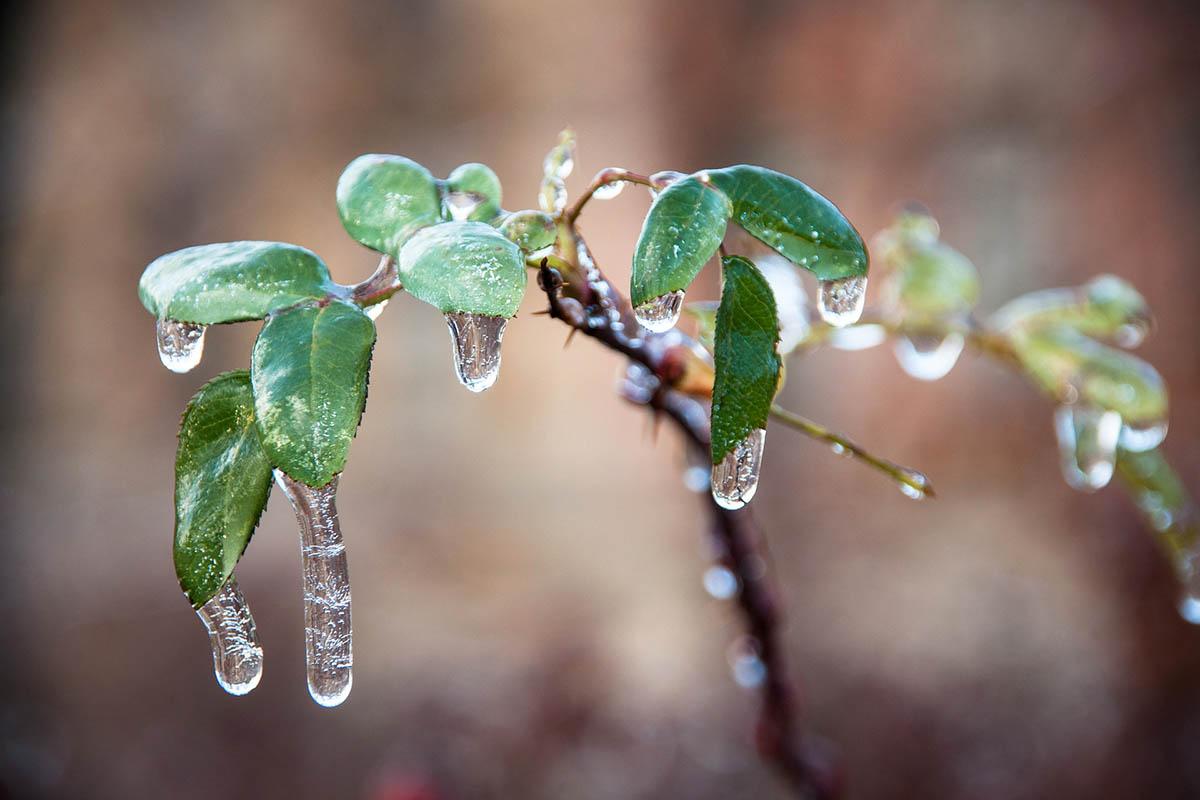 Unwetterwarnung: Gefrierender Regen im Westerwald