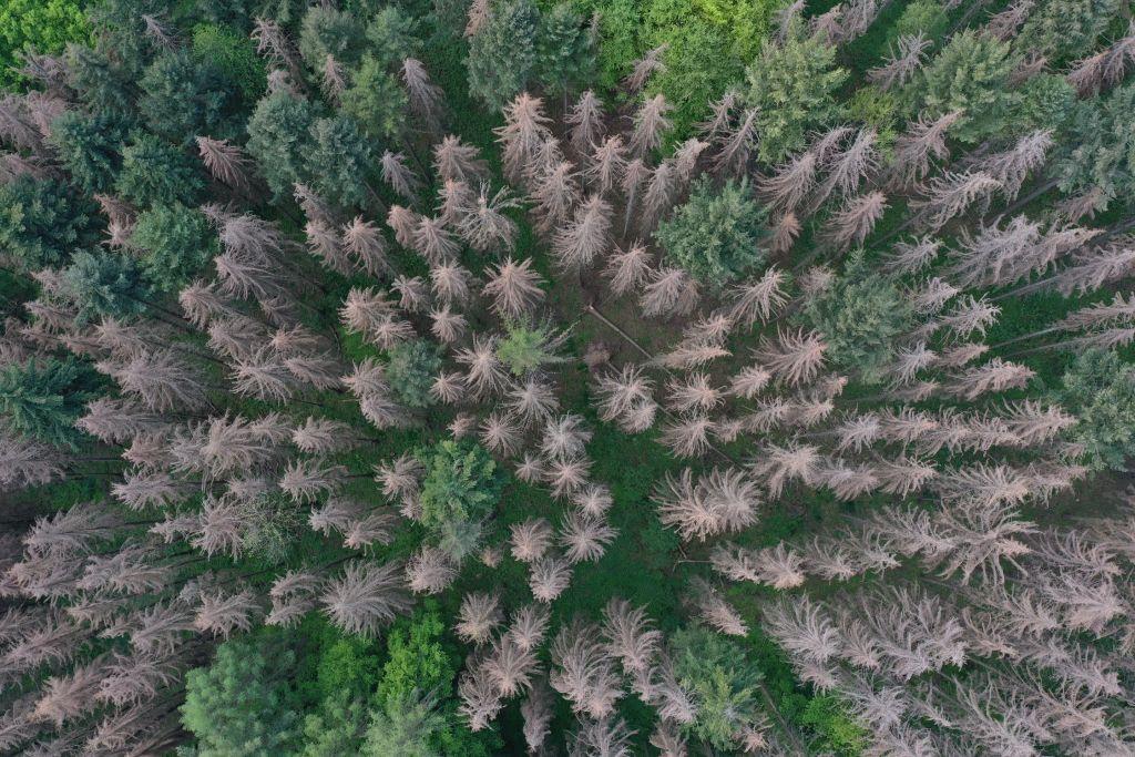 Die Heimat im Fokus – Unsere Wälder im Klimawandel!?