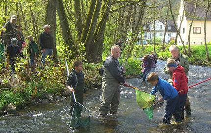 Fische fangen und bestimmen in Asdorf