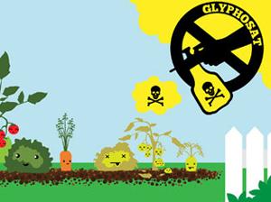 Bauernverband begrüßt die Verlängerung Glyphosatzulassung