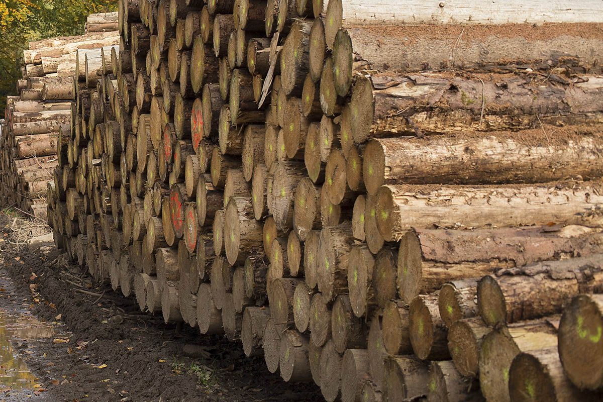 Wald weg, Waldbesitzer arm, Bauholz teuer und knapp