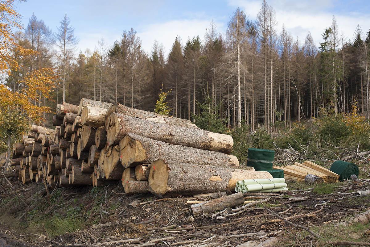 Frauenunion erkundet Folgen des Klimawandels für den Wald