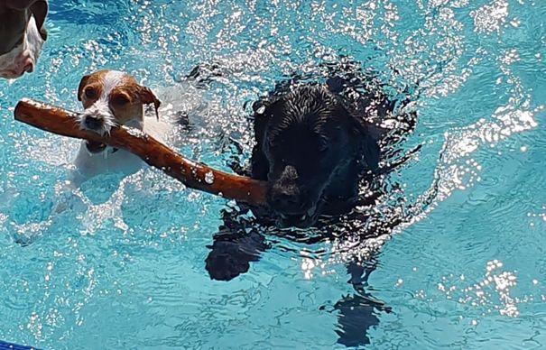 Hundeschwimmen im  Löwenbad Hachenburg