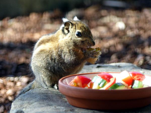Quirlige Hörnchen ziehen in Neuwied viele Blicke auf sich