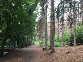 Baumfällarbeiten entlang Westerwaldsteig wegen Borkenkäferbefall