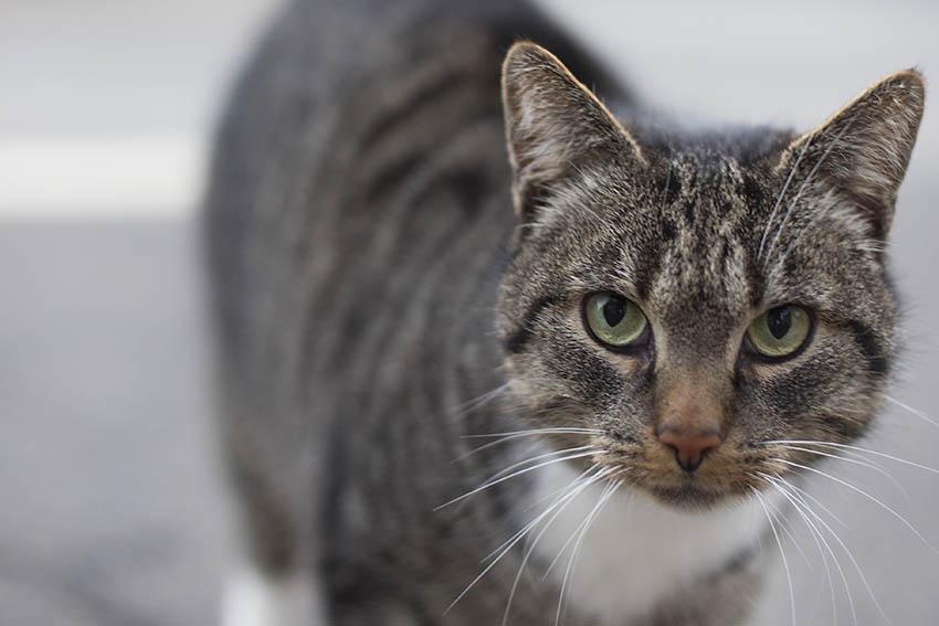 VG Puderbach will sich Katzenschutzverordnung geben