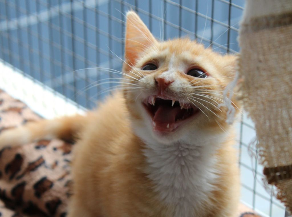 Tierschutz Siebengebirge bittet um Futterspenden für Katzenwelpen