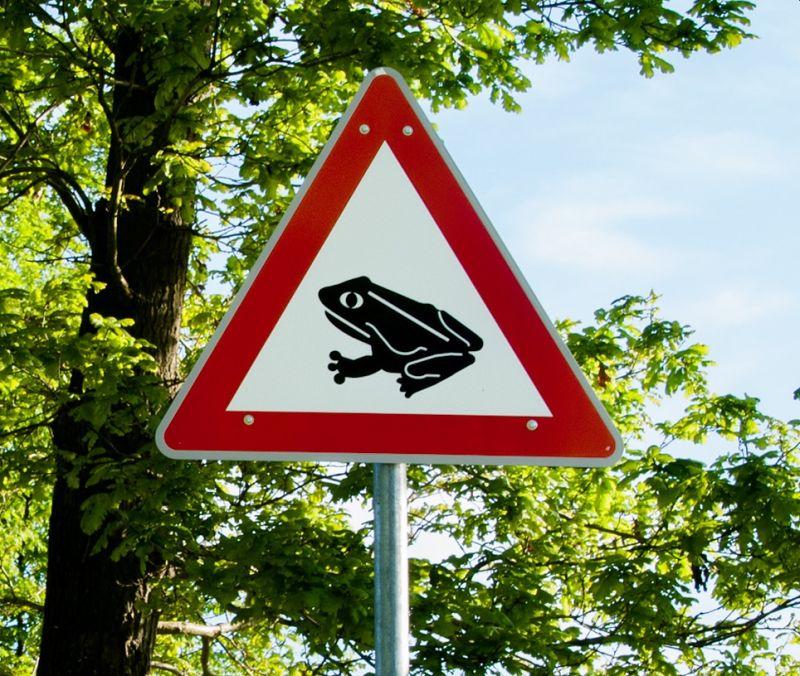 Straßensperrung wegen Krötenwanderung
