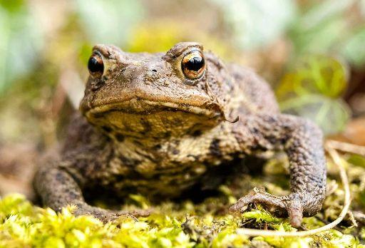 Amphibienschutz am Dreifelder Weiher
