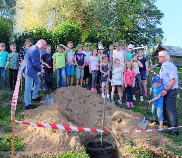 Ein Eisenholzbaum für Katzwinkel – Gemeinderat ehrte Kommunalpolitiker