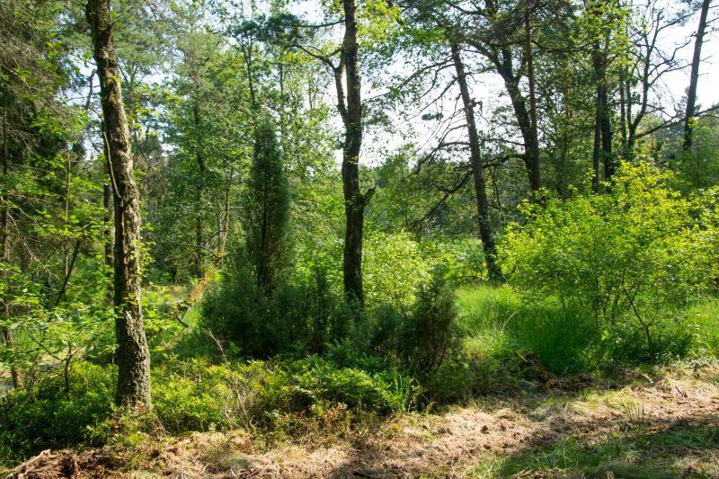 Naturschutzinitiative fordert mehr Naturschutz im Westerwald