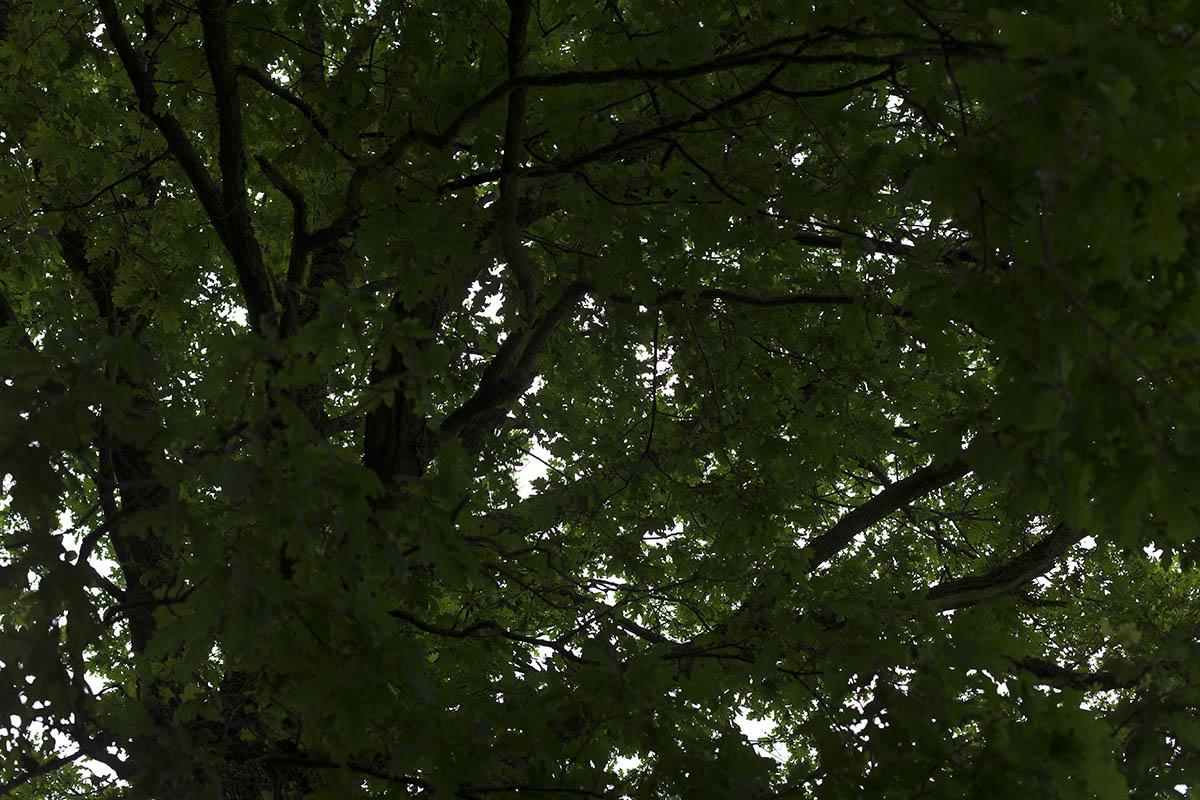 Wanderung zu den Baumriesen im Klosterwald Marienstatt