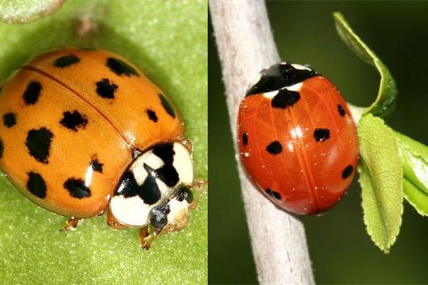 NABU-Insektensommer: Käfer, Wildbienen, Fliegen und Falter zählen