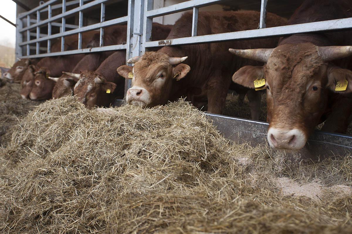 Biohof Hachenburg: Garant für tierisches und menschliches Wohlergehen