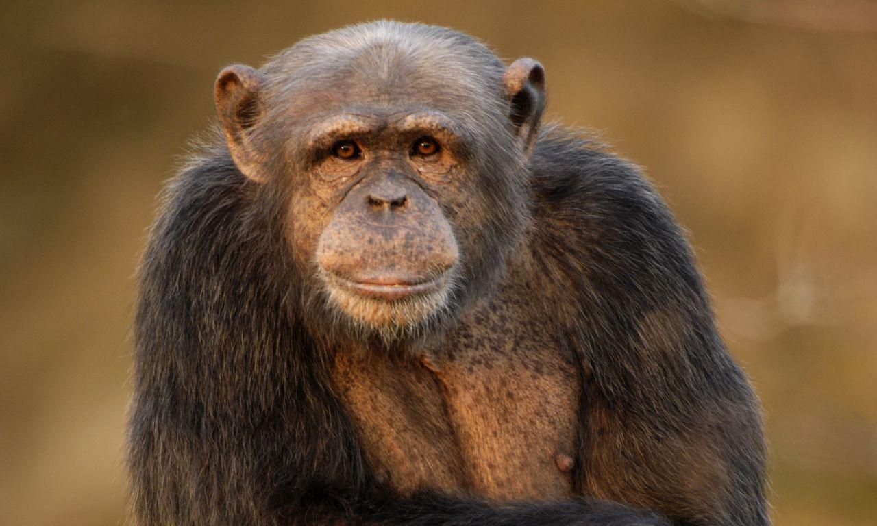 Überwältigende Unterstützung für den Zoo Neuwied