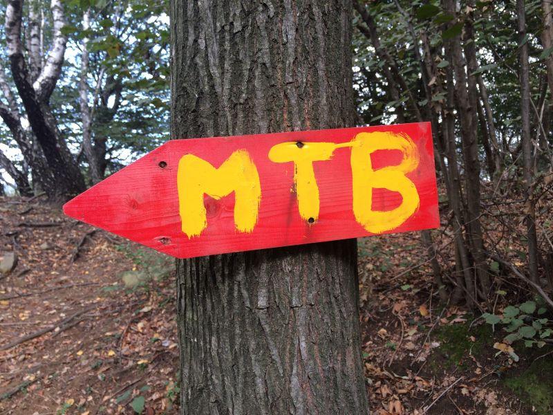 Stadtrat Montabaur berät über den Wald