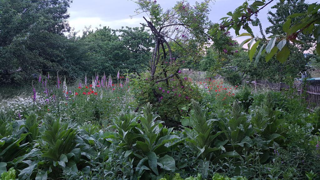 Garten – Wohlfühlort und Lebensraum