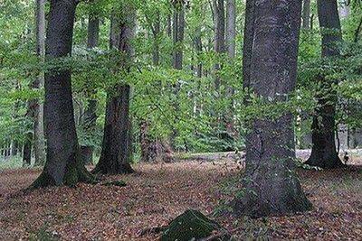 Höfken will Wald des Naubergs unter Schutz stellen