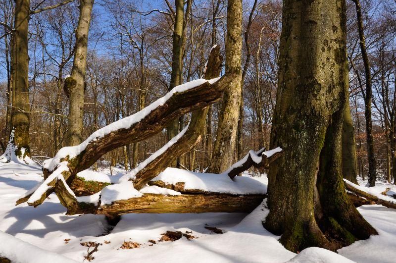 Nauberg im Winter. Foto: Harry Neumann
