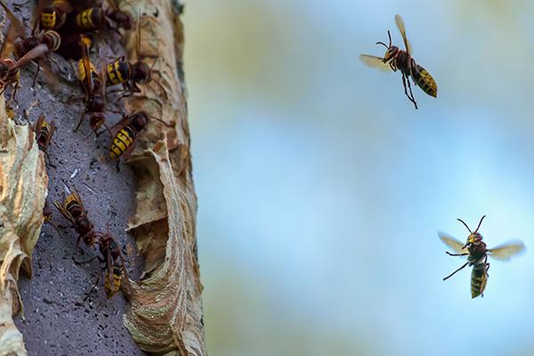 Entfernen von Nestern zieht Ordnungswidrigkeitsverfahren nach sich