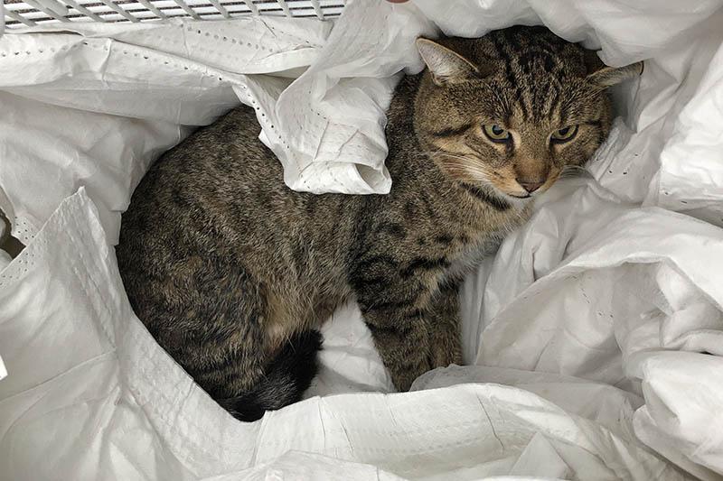 Katze nach Kollision mit PKW in Neuwied verletzt - Besitzer gesucht