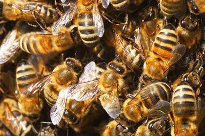 Bienenvolk bei Katzwinkel gestohlen
