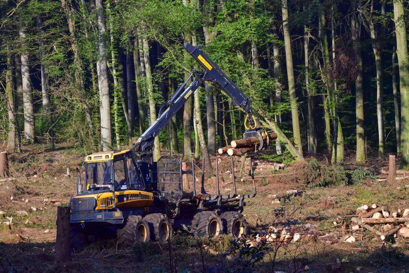 Komplette Räumung einer Waldfläche und anschließende Aufforstung mit standortfremden Douglasien. Fotos: Harry Neumann/Naturschutzinitiative e.V. (NI)