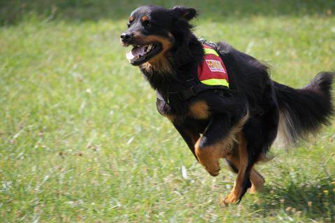 Rettungshundestaffel und Besuchshundedienst stellen sich vor