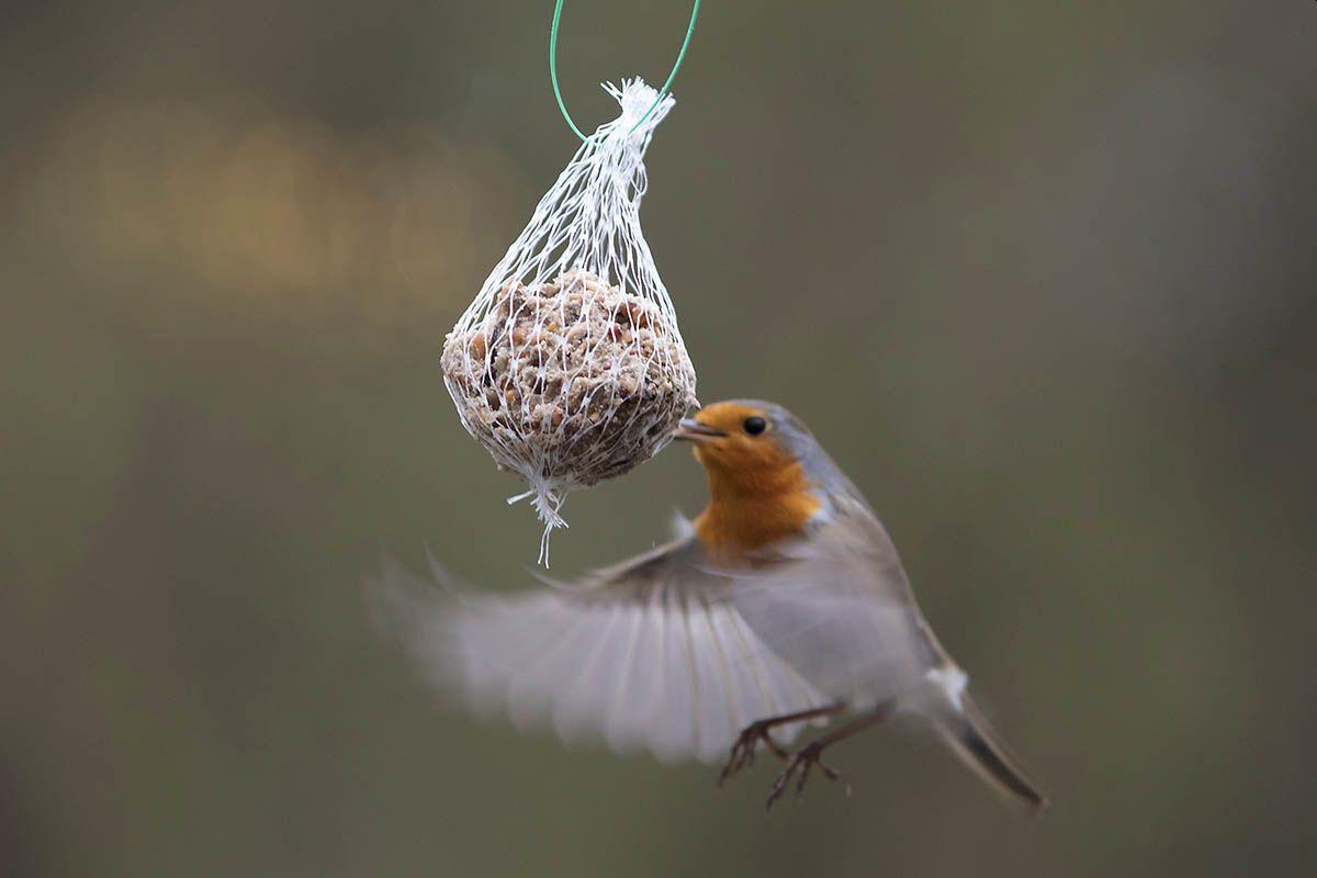 Vogel des Jahres: Horch mal, wer da singt