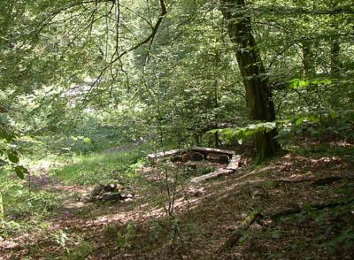 Gef�hrte Tour durch den Friedwald Wildenburger Land