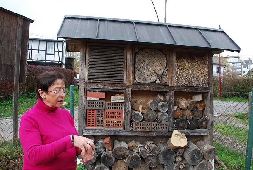 Exkursion zum Lebensraum Wildbienen und Hummeln in Rengsdorf