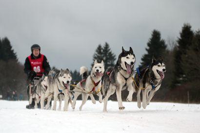39. Internationales Schlittenhunderennen in Liebenscheid