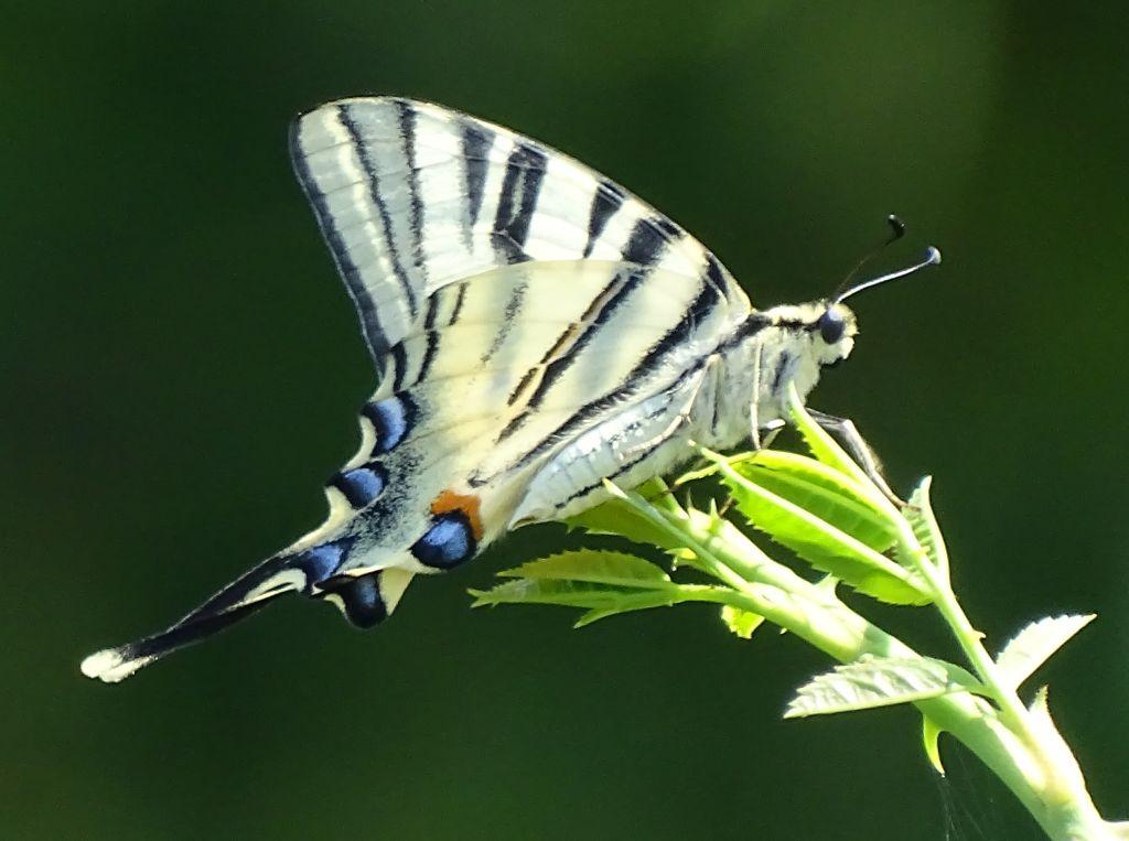 SGD Nord: Livestream am 14. April zum Insektensterben