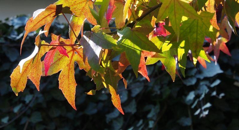 Herbstschmaus im Stöffel-Park