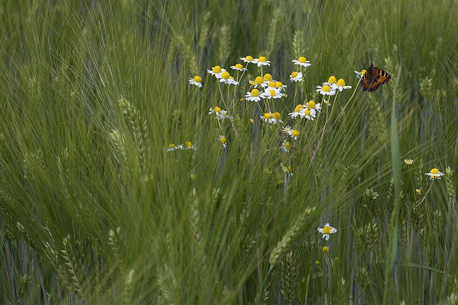 Schätze der Natur: Kräuter-Workshops bieten praktische Tipps