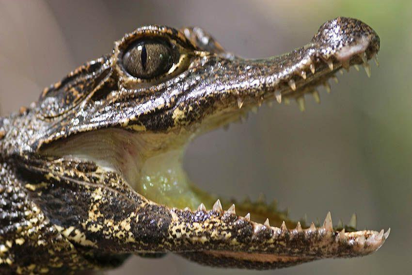 Der 3. März ist Tag des Artenschutzes