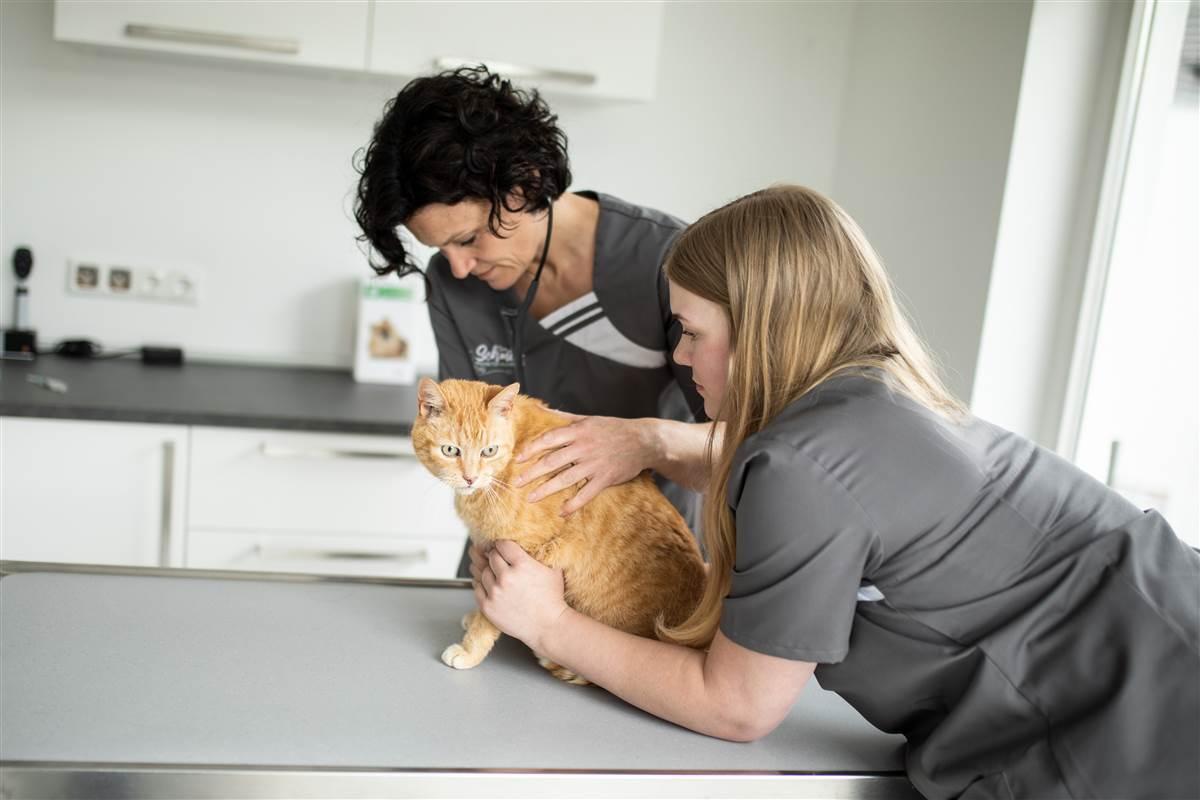 Ab sofort: Terminvergabe bei Tierarztpraxis Schmitz in Daaden