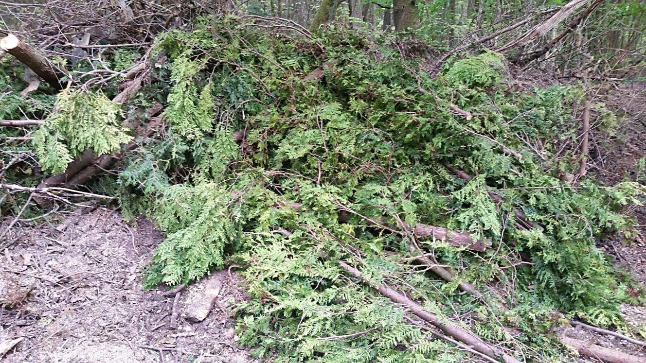 Gartenabfälle gehören nicht in den Wald