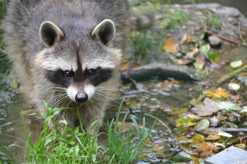 """Tier- und Wildparks während Teil-Lockdown: """"Wir können ..."""