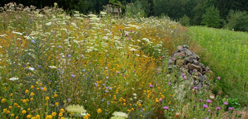 Blühstreifen mit Lesesteinhaufen in der Ackerfeldflur. Marcel Weidenfeller, NABU-Hundsangen