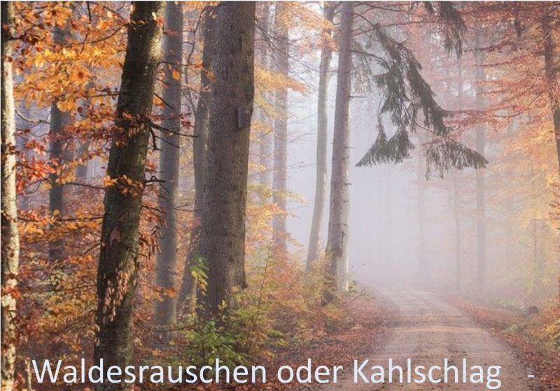 Westerwälder diskutieren über Zukunft des Waldes